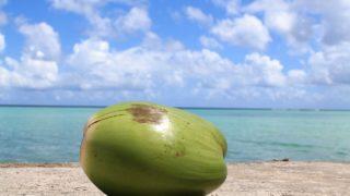 2019年9月夏休みは南の島に決定!